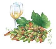 Grupp av nya druvor och exponeringsglas av vitt vin Arkivfoto