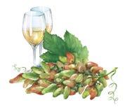 Grupp av nya druvor och exponeringsglas av vitt vin Fotografering för Bildbyråer
