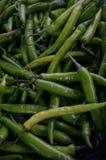 Grupp av nya gröna chiliies Royaltyfri Fotografi