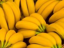 Grupp av nya gula bananer Arkivfoto