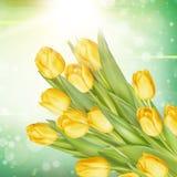 Grupp av nya gula tulpan 10 eps Arkivbild