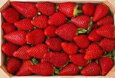 Grupp av nya jordgubbar Royaltyfria Foton