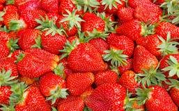 Grupp av nya jordgubbar Arkivfoton