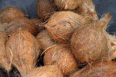 Grupp av nya kokosnötter Arkivfoton