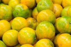 Grupp av nya mandarinapelsiner Royaltyfri Fotografi