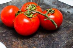 Grupp av nya mogna tomater på tappningmörkerbakgrund Arkivfoto
