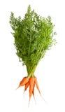 Grupp av nya morötter med grön blast Royaltyfri Bild