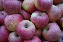 Grupp av nya röda äpplen Arkivfoto