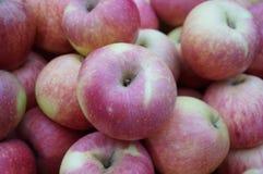Grupp av nya röda äpplen Royaltyfria Foton
