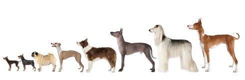 Grupp av olik formathundkapplöpning över vit arkivbilder