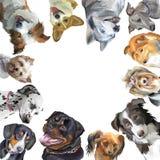 Grupp av olika avel för hundkapplöpning i fyrkanten som isoleras på vit backg vektor illustrationer