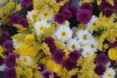 Grupp av olika blommor Royaltyfria Bilder