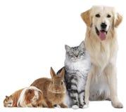 Grupp av olika husdjur Royaltyfri Bild