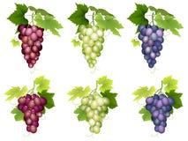 Grupp av olika variationer för druvor Arkivbild