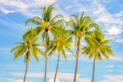 Grupp av palmträd, bakgrund för blå himmel, tropiskt loppbegrepp arkivbild