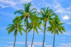 Grupp av palmträd, blå himmel arkivbild