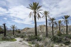 Grupp av palmträd bredvid en väg i den Tabernas öknen royaltyfri foto