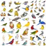 Grupp av papegojor arkivbild