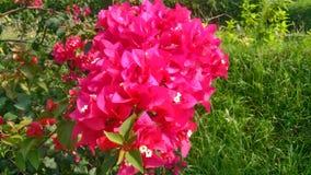 Grupp av pappers- blommor för ros Arkivbild