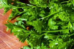 Grupp av parsley royaltyfri fotografi