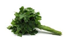 Grupp av parsley Royaltyfria Foton