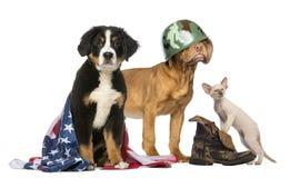 Grupp av patriotisk hundkapplöpning och katten royaltyfri bild