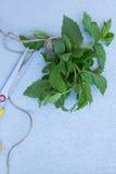 Grupp av pepparmint på en grå bakgrund Ny trädgårds- mintkaramell och Fotografering för Bildbyråer