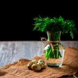 Grupp av persilja och dill i en vas som bakgrundsägg många quail Fotografering för Bildbyråer