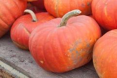 Grupp av pumpor för halloween Arkivfoton