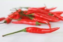 grupp av röda chilies på vit bakgrund Royaltyfri Foto