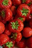 grupp av röda jordgubbar royaltyfri foto