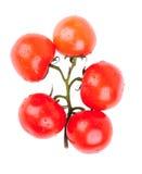 Grupp av röda körsbärsröda tomater Arkivfoto