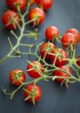 Grupp av röda körsbärsröda tomater på vinrankan Arkivbild