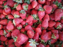 grupp av röda och nya jordgubbar royaltyfria foton