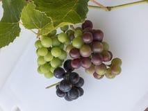 Grupp av röda och svarta vita druvor som skördas nytt med kli Arkivfoton