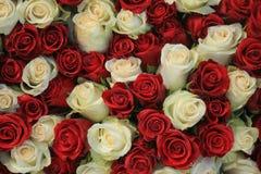 Grupp av röda och vita rosor arkivbilder
