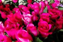 Grupp av röda rosor för dag för valentin` s, rosbukett, valentinkort Arkivfoto