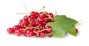 Grupp av röda vinbär med roterande vinbärsidor Arkivfoto