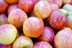 Grupp av rosa nya äpplen Royaltyfria Bilder