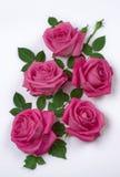 Grupp av rosa ro fotografering för bildbyråer