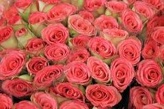Grupp av rosor på bondemarknad Fotografering för Bildbyråer