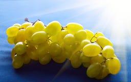Grupp av söta druvor i solen Arkivbild