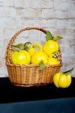 Grupp av saftiga gula kvittenfrukter quince Korg med den läckra saftiga kvitten Sen höst för tappningkvitten Royaltyfri Bild