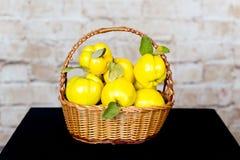Grupp av saftiga gula kvittenfrukter quince Korg med den läckra saftiga kvitten Sen höst för tappningkvitten Arkivfoton