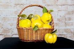Grupp av saftiga gula kvittenfrukter quince Korg med den läckra saftiga kvitten Sen höst för tappningkvitten Arkivfoto