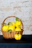 Grupp av saftiga gula kvittenfrukter quince Korg med den läckra saftiga kvitten Sen höst för tappningkvitten Royaltyfria Bilder