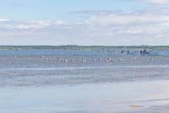 Grupp av seagullen fotografering för bildbyråer