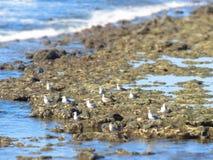 Grupp av seagulls Royaltyfria Bilder