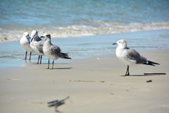Grupp av Seagulls på stranden Royaltyfri Bild