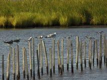 Grupp av seagulls som står på pinnar royaltyfri fotografi